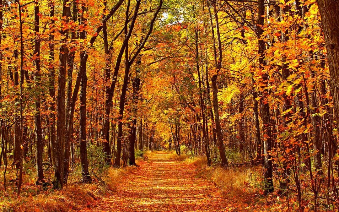 Places you might consider for Autumn holiday